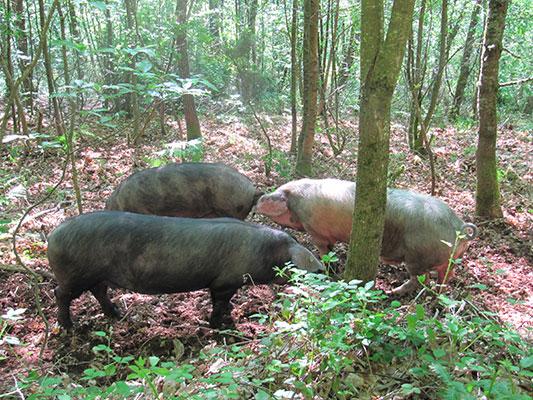 eco turismo rural asturias